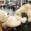 ตุ๊กตาหมีสก็อตต์ Scott Bear ไซส์ 1.6 เมตร thumbnail 15