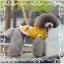 เสื้อสุนัขสีเหลือง (ไซส์ L,XXL) thumbnail 1