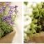 กระถางดอกไม้ปลอม สูง15cm Tree10 thumbnail 16