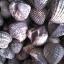 หอยแครงจัมโบ้ thumbnail 3