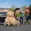 ตุ๊กตาหมีสก็อตต์ Scott Bear ไซส์ 1.6 เมตร thumbnail 26