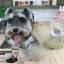 ที่ให้น้ำสุนัขและแมว (ส่งฟรี) thumbnail 1