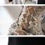 เดรสสั้นแขนยาว สวยหรู กับแฟชั่นเรียบหรู แขนเสื้อแบบซีทรู ตกแต่งด้วยลูกไม้สีทอง thumbnail 3
