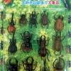 ชุดแมลงด้วง 13 ตัว (DB0401-15A)