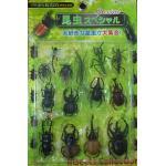 ชุดแมลงคละ 14 ตัว (DB0401)