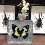 The Rock, Black Mellow Yellow Butterfly ♥ที่ทับกระดาษ ผีเสื้อเหลือง-ดำ ในเรซิ่น ทรงก้อนหิน♥