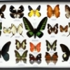 Butterfly by 20-square