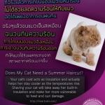การไถขนแมวช่วยลดความร้อนได้จริงๆหรอ?