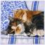 กระดาษสาพิมพ์ลาย สำหรับทำงาน เดคูพาจ Decoupage แนวภาพ ครอบครัวสุขสันต์ พ่อแมว แม่แมว ลูกแมว นอนกอดกัน thumbnail 1
