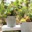 Pre-Order กระถางต้นไม้สังกะสีทำสีเก่าลายริ้ว หูเชือก Zakka เซตละ 2-3 ใบ มี 3 แบบ thumbnail 6