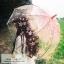 ร่มกันแสงแดดUV ร่มกันฝน ร่มลูกไม้เจ้าสาว ร่มแบบแปลกๆ ดีไซน์ทันสมัยค่ะ thumbnail 1