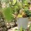 Pre-Order กระถางต้นไม้สังกะสีทำสีเก่าลายริ้ว หูเชือก Zakka เซตละ 2-3 ใบ มี 3 แบบ thumbnail 2