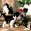 แนวภาพสัตว์ ลูกแมวน้อยลายขาวดำ ภาพโทนสีน้ำลงสี เป็นภาพ 4 บล๊อค กระดาษแนพกิ้นสำหรับทำงาน เดคูพาจ Decoupage Paper Napkins ขนาด 33X33cm thumbnail 1