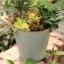 Pre-Order กระถางต้นไม้สังกะสีทำสีเก่าลายริ้ว หูเชือก Zakka เซตละ 2-3 ใบ มี 3 แบบ thumbnail 21