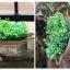 พร้อมส่ง กระถางต้นไม้ ถังสังกะสี ดีบุก ทรงรี แต่งด้วยเชือกปอ Zakka มี 3 ขนาด thumbnail 4