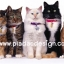 กระดาษสาพิมพ์ลาย rice paper เป็น กระดาษสา สำหรับทำงาน เดคูพาจ Decoupage แนวภาพ น้องแมวขนฟูยกขบวนมากัน 5 ตัว 5 ลาย มาให้ถ่ายรูป (ปลาดาว ดีไซน์) thumbnail 1