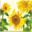 แนวภาพดอกไม้ เป็นแนวดอกทานตะวัน เป็นภาพครึ่งแผ่น กระดาษแนพกิ้นสำหรับทำงาน เดคูพาจ Decoupage Paper Napkins ขนาด 33X33cm thumbnail 1