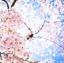 หัวน้ำหอมกลิ่น Sakura thumbnail 1