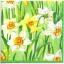 แนวภาพดอกไม้ เป็นดอกไม้ดอกสีขาวสีเหลืองบนทุ่งหญ้า เป็นภาพเต็ม กระดาษแนพกิ้นสำหรับทำงาน เดคูพาจ Decoupage Paper Napkins ขนาด 33X33cm thumbnail 1