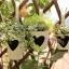 Pre-Order ถังสังกะเคลือบสีลายหัวใจ ที่ใส่ต้นไม้ ใส่ของแบบแขวน Zakka มี 4 ขนาด thumbnail 12