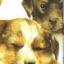 แนวภาพสัตว์ ภาพวาดน้องหมา ภาพไม่ซ้ำทั้งแผ่ง ภาพลายกระจายเต็มแผ่น กระดาษแนพคินสำหรับทำงาน เดคูพาจ Decoupage Paper Napkins ขนาด 21X22cm thumbnail 1