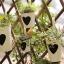Pre-Order ถังสังกะเคลือบสีลายหัวใจ ที่ใส่ต้นไม้ ใส่ของแบบแขวน Zakka มี 4 ขนาด thumbnail 7