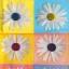 แนวภาพดอกไม้ ดอกไม้สีขาวบนพื้นลายกรอบหลากสี ภาพลายกระจายเต็มแผ่น กระดาษแนพคินสำหรับทำงาน เดคูพาจ Decoupage Paper Napkins ขนาด 21X22cm thumbnail 1