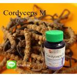Cordyceps M คอร์ดิเซพส์ เอ็ม ตังถั่งเฉ้า ชนิดแคปซูล สูตรสำหรับผู้ชาย