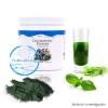 คลอโรฟิลล์ ยูนิซิตี้ Chlorophyll unicity