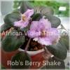Rob's Berry Shake - Semiminiature