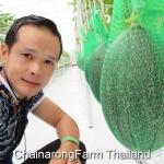 แตงธิเบต ฮามี่กั๋ว HamiGua Melon (20เมล็ด)