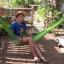 เปลเชือก Nylon พูกกับเสาบ้าน หรือต้นไม้ในนั่งเล่น thumbnail 1