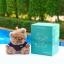 แบตสำรอง Power Bank ตุ๊กตาหมี KATE BEAR 6000 mAh ลดเหลือ 540 บาท ปกติ 890 บาท thumbnail 4