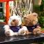 แบตสำรอง Power Bank ตุ๊กตาหมี KATE BEAR 6000 mAh ลดเหลือ 540 บาท ปกติ 890 บาท thumbnail 3