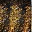 เอมจิตต์ ec1361 thumbnail 1