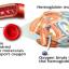 THC คลอโรฟิลล์ พลัส+วิตามินซี thumbnail 7