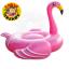 Flamingo thumbnail 1