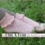 [ลดพิเศษ 40 บาท] ถุงเท้าระบายน่ารัก เหลือ สีเทา thumbnail 8