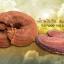หลินจือมิน ผลิตภัณฑ์ยอดฮิต บำรุงร่างกาย ลดความเสี่ยงของโรคภัย thumbnail 10