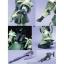 [PG] MS-06F Zaku II thumbnail 4