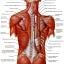หลินจือมิน ผลิตภัณฑ์ยอดฮิต บำรุงร่างกาย ลดความเสี่ยงของโรคภัย thumbnail 8
