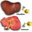 THC คลอโรฟิลล์ พลัส+วิตามินซี thumbnail 9