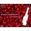 IRIS Bio-Placenta Essence with Argireline 12ml.แพ็คละ 3กล่อง ราคาประหยัด.เซรั่มรกแกะหน้าเด้ง thumbnail 17