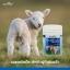 Healthway Goat Tablet with Calcuim นมแพะอัดเม็ด 300 Tablets thumbnail 8