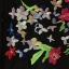 Charlotte Embroider Shirt by Seoul Secret thumbnail 9