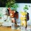 ตุ๊กตา หมี กระถางเซรามิค พร้อมชุดปลูกต้นอ่อน เมล็ดพันธุ์ Clover thumbnail 10