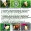 ตุ๊กตา แมว กระถางเซรามิค พร้อมชุดปลูกต้นอ่อน เมล็ดพันธุ์ Wild Strawberry thumbnail 7