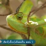 รายการ Animals Speak กับฟาร์ม Exotic Pets : ReptileHiso.com