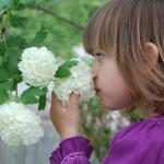 การดมกลิ่น และ ประสาทรับกลิ่นของทารก