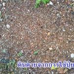 เทคนิคการพลิกฟื้นผืนดินด้วยเกษตรอินทรีย์(1)